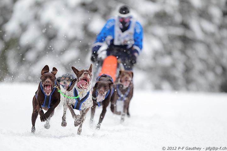 championnat d'Europe de chiens de traineau - Les Fourgs